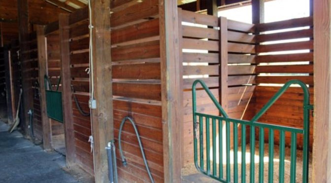 Horsey set: stable management